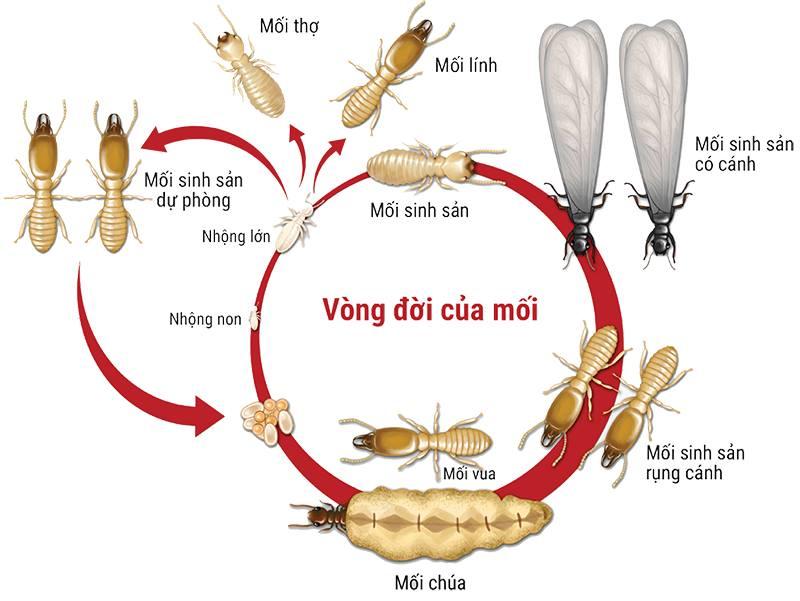 Công Ty Phát Triển Công Nghệ Diệt Côn Trùng Việt Nam